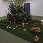 Salon mycologique 2012