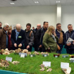 Salon Mycologique 2019